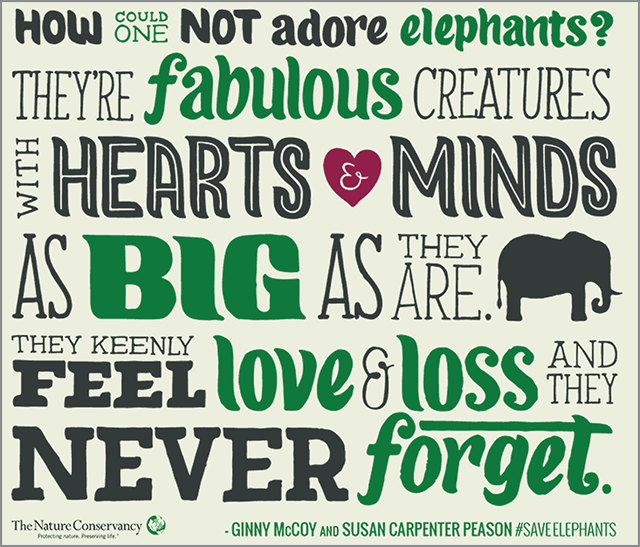 savetheelephants